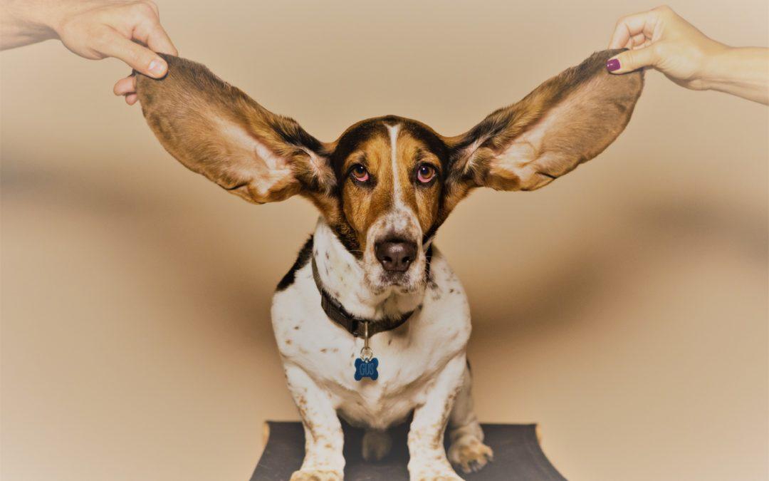 Tache violacée sur l'oreille… Lyme ?