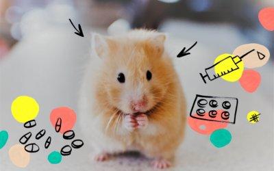 Des souris et des chercheurs