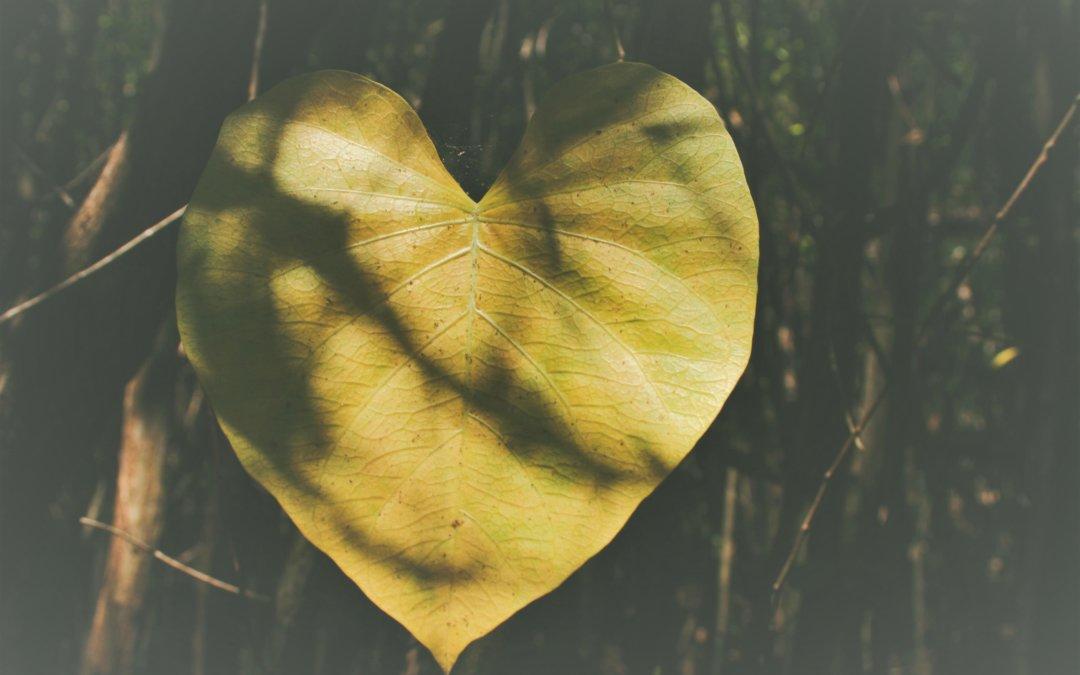 Un cœur de Lymé