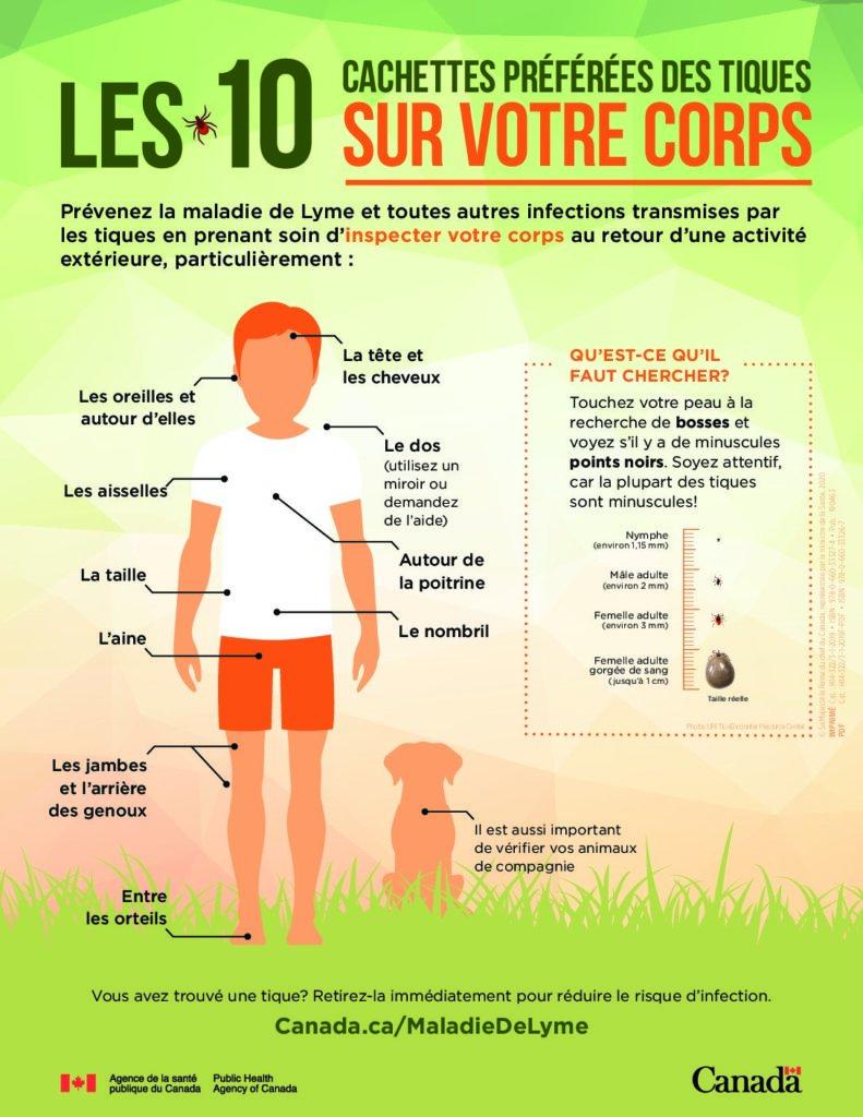 cette image montre où un adulte ou un enfant peut être piqué par une tique et quels endroits du corps doivent être vérifiés.